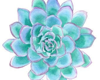 Teal Succulent Watercolor Painting - 8 x 10 / 8.5 x 11 - Giclee Print