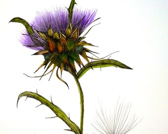 ARTICHOKE THISTLE - 11 x 15 inch watercolor/pen/ink illustration