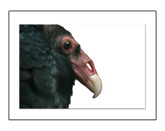 Birthday Card with Vulture