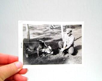Vintage Nature Farm Life Photo, Vintage Farmer with Cow Photo, Mid Century Black White Photo