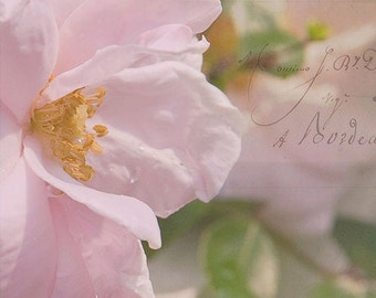 """Romance-Fine Art Photography-Wall Decor, Girls Bedroom Decor-Floral Photography-French Script-5x5 and Larger Print-""""Petals"""""""