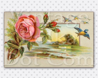 Vintage Clip Art Rose and Birds Countryside Victorian Graphics Printable Digital Instant Download Old Postcard