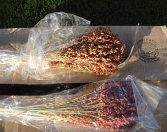 Broom Corn   Dried Broom Corn  Great For Fall Decorations or Wreaths