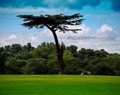 Cassiobury Park Tree in Watford, England - Fine Art Photograph 8x12