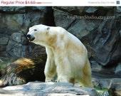 CRAZY SUMMER CLEARANCE Polar Bear - Fine Art Lustre Print