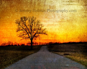 Trees are beautiful at sunset, enjoy the view daily with this fine art print