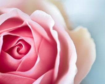 rose photograph flower photo fine art photography wall decor nature nursery art floral valentine love garden