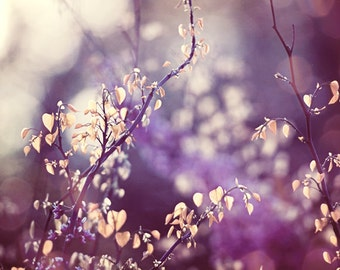 "Purple Nature Photography, plum cream beige yellow branches photo branch print violet decor botanical wall art color photograph, ""Luminous"""