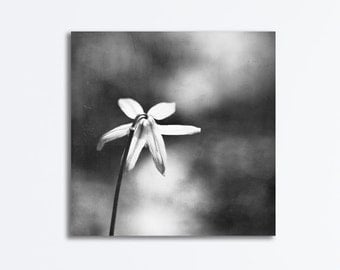 "Modern Black and White Canvas Print - flower grey dark gray neutral photography gallery wrapped canvas nature wall art floral, ""Lonesome"""