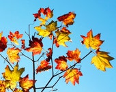 Fall leaves photo, canvas or print, Autumn leaves photo canvas, red, orange, yellow
