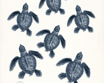Coastal Decor Giclee Art Print - Six Little Loggerhead Sea Turtles - Endangered Species Natural History Series dark blue - size options