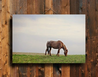 Summer Grazing - Horse art - Horse photography - Red Roan Horse - Horse decor - Country decor - Horse lover decor - Animal photography