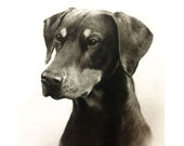 "Charcoal custom pet portrait / 11"" x 15"" / hand drawn / charcoal / drawing / portrait of your pet / dog portrait."