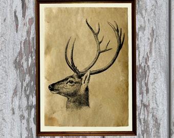 Deer poster Animal illustration Wildlife art print Antique paper  AK369