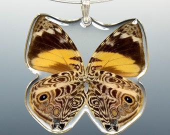Real Whole Butterfly Pendant Necklace, Blomfild's Beauty Butterfly