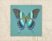 Butterfly Wall Decor, Teal Photography, 8x8 Photo, Black, Blue and Green Photograph, Minimalist Picture, Square Art Print