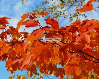 Orange leaves fine art photography, fall wall decoration, fall wall art, fsll photography,