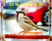 Whimsical Fun Pop Art City Life Sparrow Square Fine Art Photography Print or Gallery Canvas Wrap Giclee