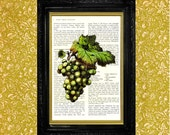 Green Grapes on Vintage Cookbook Page Book Page Art Print Upcycled Art Dictionary Page Art Print