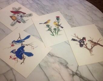Vintage Collector's Portfolio of Song Birds Prints