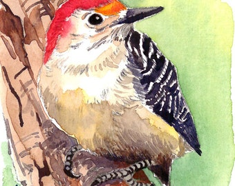 ACEO Limited Edition 3/25- Red-bellied woodpecker, Art print of an original watercolor painting, Bird art, Small housewarming gift idea