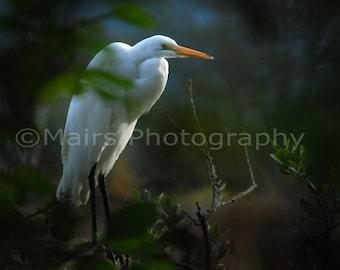 Nursery Decor, White Great Egret Trees, Nature Photography,Bird Photography, Fine Art Photography matted & signed 5x7 Original Photograph