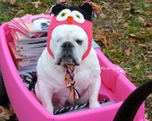 BOOK PEDDLER Piper The One-eyed BULLDOG, Dog Photo, Owl Hat, Cute rescue dog with an owl hat, Special Needs English Bulldog in a wagon