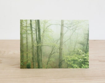 Four blank note cards, original green forest photography cards by Julia Paul Pottery.