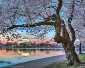 DC Cherry Blossom Photo - Washington DC Print - Cherry Blossom Festival - Jefferson Memorial - Washington DC Art, Sunrise