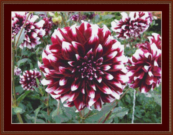 Dahlia Flowers II Cross Stitch Pattern /Digital PDF Files /Instant downloadable