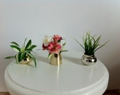 Doll Plant 1:6 Scale / Playscale for Barbie/ Fashion Royalty / Monster High Collectors