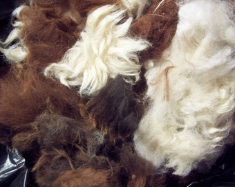 Raw Alpaca Fleece *Third Cut*, 8oz