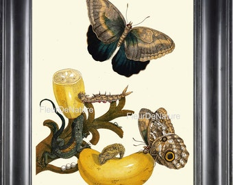 BOTANICAL PRINT Sibylla 8x10 Botanical Art Print 41 Beautiful Blue Butterfly Banana Tropical Fruit Home Decoration Interior Design