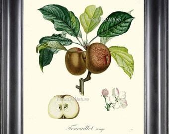 BOTANICAL FRUIT PRINT Poiteau 8x10 Botanical Art Print 31 Beautiful French Apple Tree Branch Spring Summer Garden Plant Gift Antique Writing