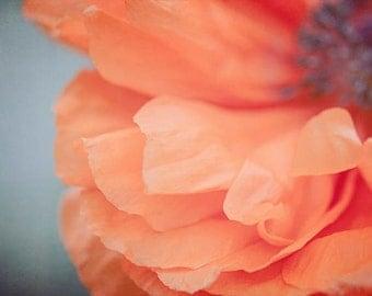 "Flower Photograph, Poppy Flower Wall Art, abstract, poppy red, orange, grey, petals, floral wall decor, 8x10 - 20x24, ""Poppy Study 3"""