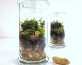 Tall Cool Terrarium....A Modern Green Glass Terrarium Send a Terrarium as a Gift...Moss Terrarium Live Plants