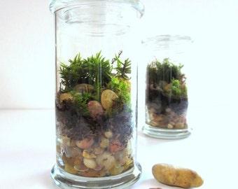 Tall Cool Terrarium....A Modern Green Glass Terrarium Send a Terrarium as a Gift...Moss Terrarium Live Plants