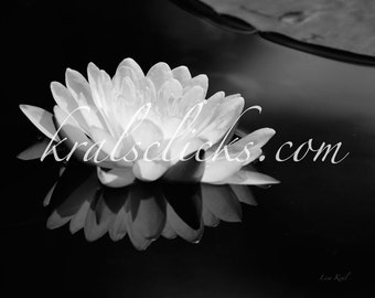 Black White Lotus Photograph Flower Photograph Fine Art Photography Water Lily Reflection white black wall decor photo Lake Home Wall Art