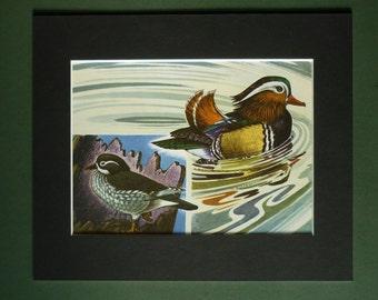 1960s Vintage Mandarin Duck Print - River Bird Picture - Available Framed - Vintage Bird Art - Bird Gift - Bird Print - Ornithology Print
