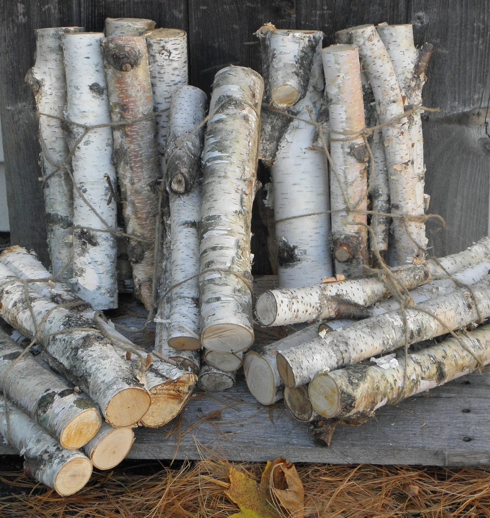 White birch logs diameter decorative by