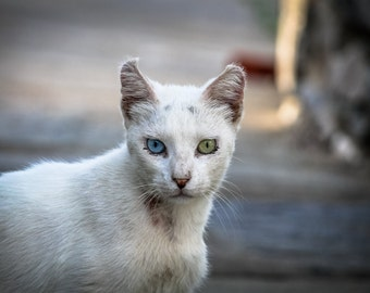 "Cats of Paros Island, Greece - 8x10"" metallic print"