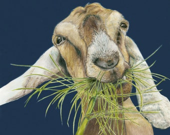 Feast, Nubian Goat, giclée print of original drawing, with mat