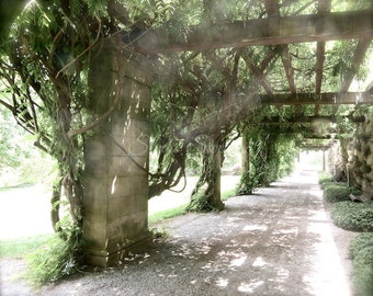 "Nature Photography, Nature Art, Tree Photo, North Carolina Landscape Print, Biltmore Estate, Asheville Art, Garden Art- ""Wisteria Vines"""