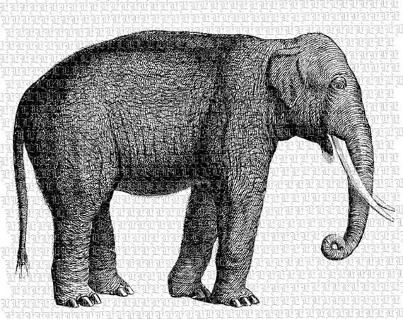 Vintage Elephant Graphic Elephant Illustration Printable Vintage Elephant Illustration