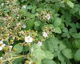 Blackberry shoots and leaves, plant dye, natural yarn dye, hedgerow dye, botanical dye, eco dye100g