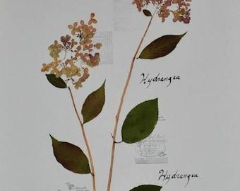 Herbarium framed dried natural flowers