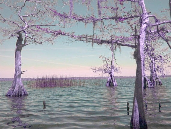 Wetland photography Purple trees Relaxing photograph Purple  Wetland photogr...
