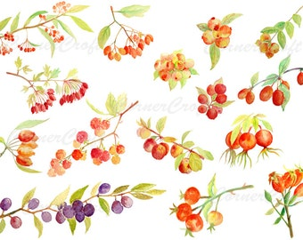 Hand painted watercolor autumn berries fall berries digital clipart instant download for greeting cards wall decor