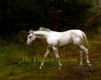 The Yearling colt....  8 x 10 Unicorn print photograph altered art painting nature trees. forest renaissance gothic