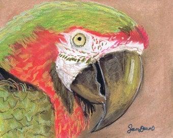 Bird/Parrot, Print Art 8x10 or 16x20